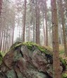 rock in the middle of the forest