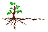 Green tree with roots. - 141881825