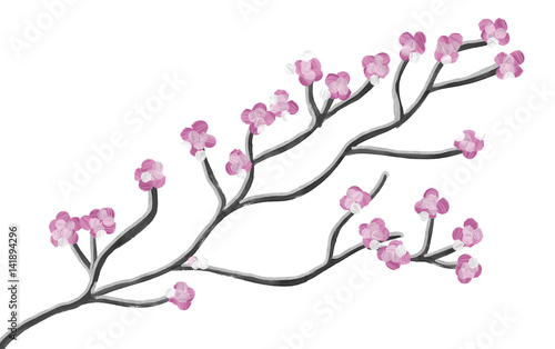 Hand drawn pink branch of cherry tree on white background, isolated illustration painted by oil color on canvas, high quality © Iryna