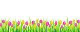 Fototapety Spring background banner with colorful tulips. Vector illustration.