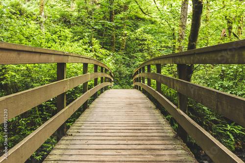 Drewniany most w bujnym lesie