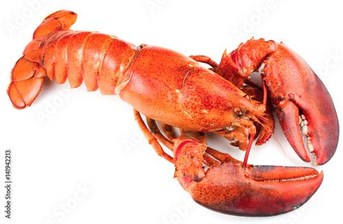 Fototapeta Red lobster isolated on white background