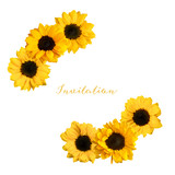Two vignettes of shiny yellow sunflowers, isolated
