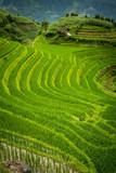 rizières