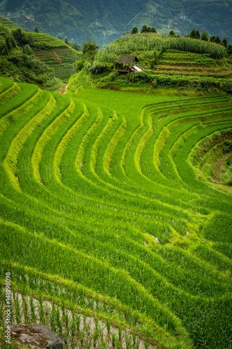 Tuinposter Rijstvelden rizières