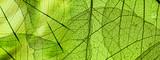 green foliage texture - 142001247
