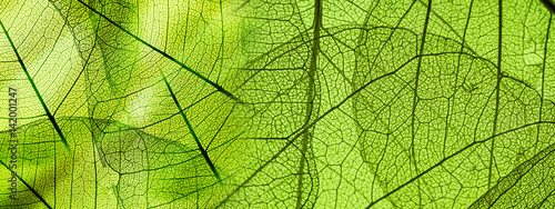 In de dag Natuur green foliage texture