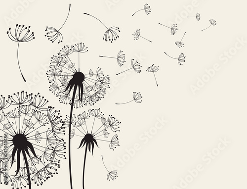 Fototapeta Abstract Dandelions dandelion with flying seeds