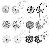 Abstract Dandelions for spring season © rattikankeawpun