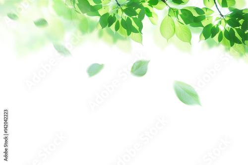 新緑 春 背景イメージ