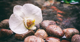 Orchid and pebbles in water background