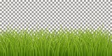 Isolated Fresh Green Grass - 142065898