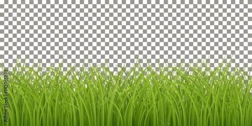 Fototapeta Isolated Fresh Green Grass
