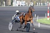 cheval de courses - 142076090