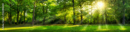 Grünes Wald Panorama im Sommer Poster