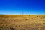 Rural landscape with dry grass and silhouette of dead tree - 142081420