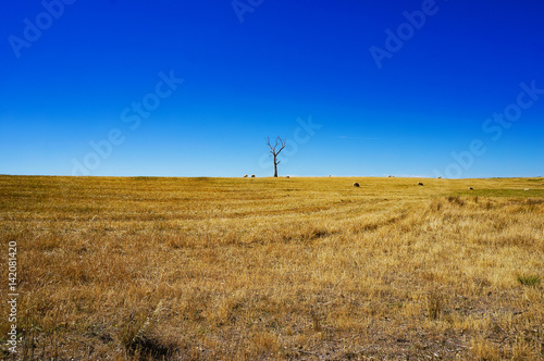 Aluminium Donkerblauw Rural landscape with dry grass and silhouette of dead tree