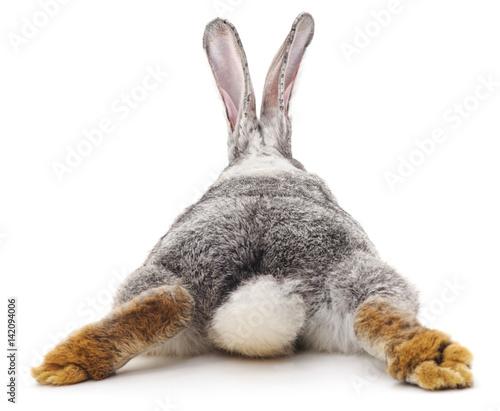 Foto Murales Grey rabbit.