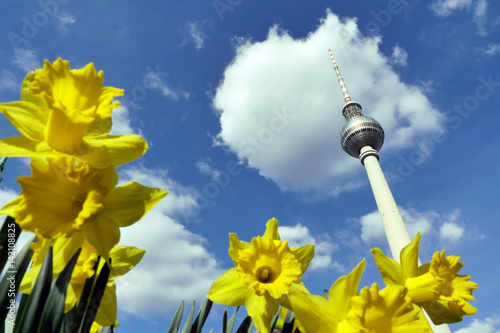 Fotobehang Berlijn Berlin, tv tower and daffodils on a sunny day