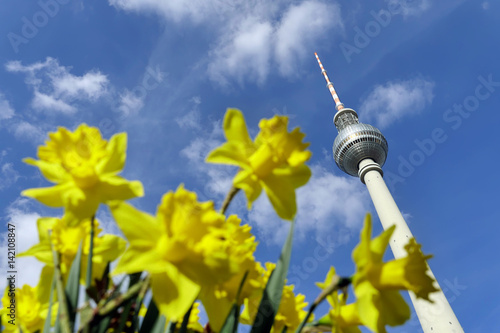 Berlin, tv tower and daffodils on a sunny day