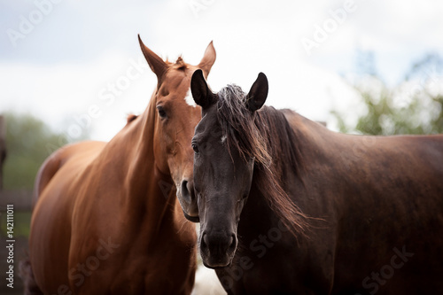 Beautiful horses look right into the soul
