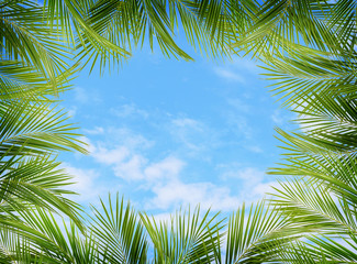 Green palm branches and blue sky