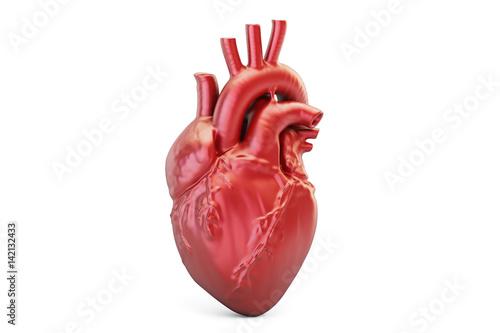 Human heart, 3D rendering © alexlmx
