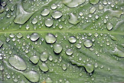 raindrops-swiecilo-na-zielony-lisc