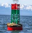 Sealions on buoy