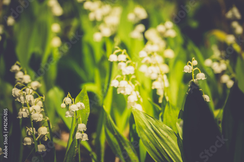 Fotobehang Lelietjes van dalen May Lily Blooming Retro