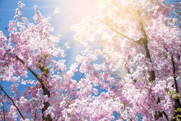 Frühlingsmotiv