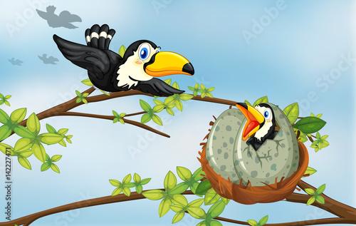 ptaki,-tukany,-bajki,-rysunek