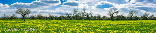Springtime scenery beautiful wide landscape panorama with fresh spring meadow and trees
