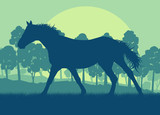 Horse wild forest trees landscape with sunset vector background