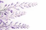 lavender flowers branch - 142270457