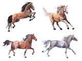 Watercolor painting of galloping horse, free running mustang aquarelle - 142304081