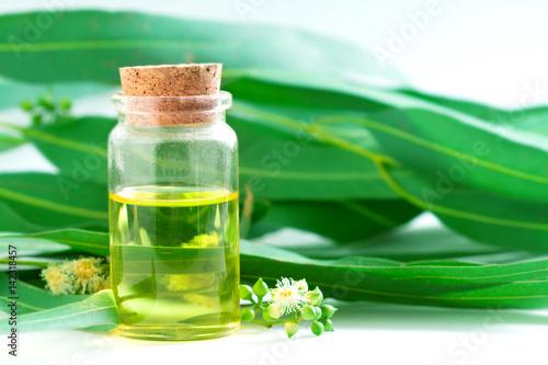 Plakat Eucalyptus essential oils in glass bottle ,oganic herbal aromatherapy concept