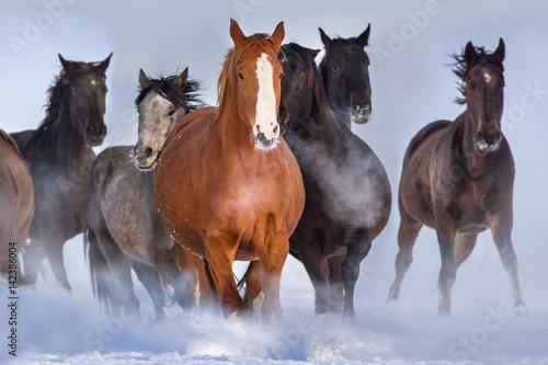 konski-stado-bieg-zamkniety-szybki-w-zima-sniegu-polu