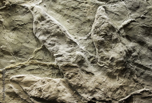 Poster Dinosaur stone footprint