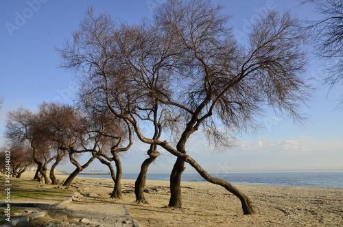 Sahilde Ağaçlar Poster