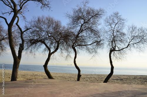 Sahilde Ağaç Silüetleri Poster