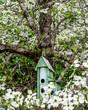 Dogwoods and Birdhouses I