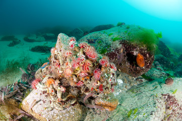Colorful coldwater reef in the deep of East Sea