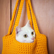White cat sitting in a basket
