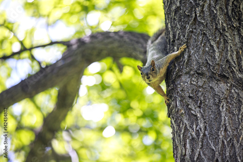 Squirrel playing on the tree Poster
