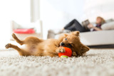 Beautiful young woman with her dog playing with ball at home. - 142450852