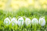 Wiese Ostereier Eier