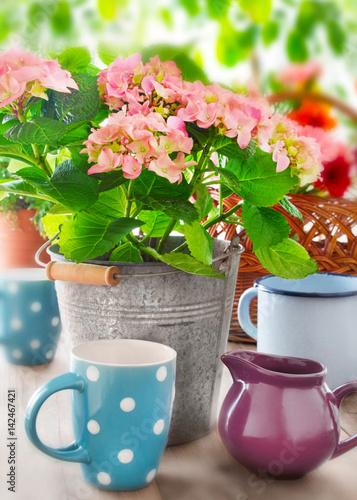 ogrod-dekoracje-i-kwiaty