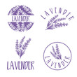 Set of template logo design of abstract icon lavender. Vector illustration