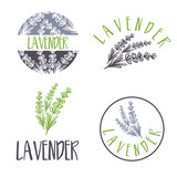 Set of template logo design of abstract icon lavender. Vector illustration - 142484083